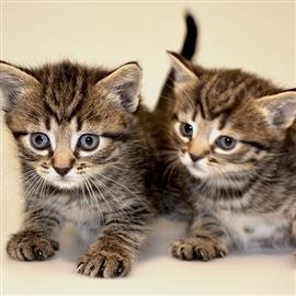 Kissavakuutus Hinta