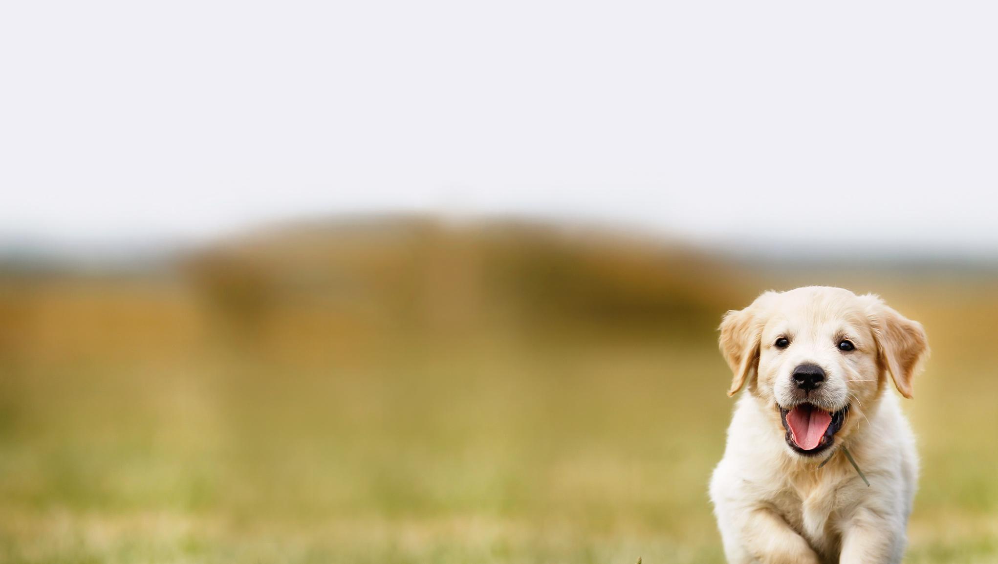 731c37497f3 Pet insurance   If.ee